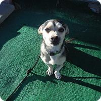 Adopt A Pet :: KARSON Petsmart Sat 11-4 - Atascadero, CA