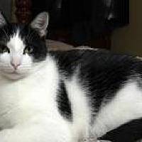 Adopt A Pet :: Chynna - Sedalia, MO
