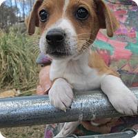 Adopt A Pet :: KENJI - Williston Park, NY