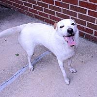 Adopt A Pet :: Claire - Lumberton, NC