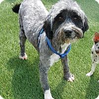 Adopt A Pet :: Dinkey - House Springs, MO