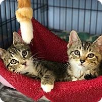 Adopt A Pet :: Ryan - Island Park, NY