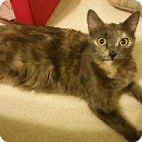 Adopt A Pet :: Maui - McHenry, IL