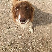 Adopt A Pet :: Dash - Parker, KS