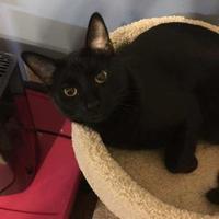 Adopt A Pet :: DUSK - Houston, TX