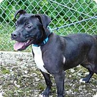 Adopt A Pet :: BEAUTY - Belleville, IL
