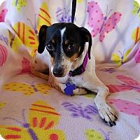 Adopt A Pet :: Waverly - Danbury, CT