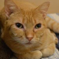 Adopt A Pet :: Zany-FIV+ - Elkhorn, WI