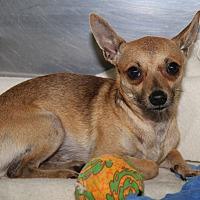 Adopt A Pet :: Sanchez - Marietta, OH
