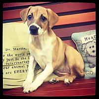 Adopt A Pet :: Reba - Grand Bay, AL