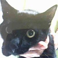 Adopt A Pet :: A021154 - Tavares, FL