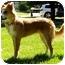 Photo 3 - Border Collie Dog for adoption in Bellevue, Nebraska - Seamus