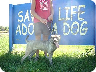 Labrador Retriever Mix Dog for adoption in Zanesville, Ohio - # 195-12 @ Animal Shelter