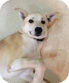 Labrador Retriever Mix Dog for adoption in Okotoks, Alberta - Edwin