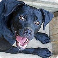 Adopt A Pet :: Eddy - Clinton, LA