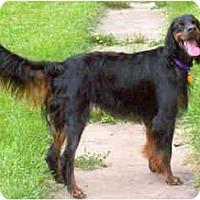 Adopt A Pet :: Dash - DeKalb, IL
