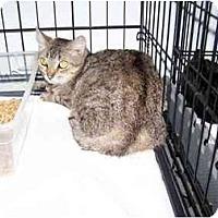 Adopt A Pet :: Serena - Syracuse, NY
