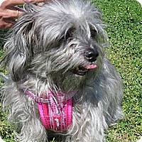 Adopt A Pet :: Shadow (Courtesy) - Scottsdale, AZ
