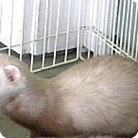Adopt A Pet :: Kobe - Indianapolis, IN