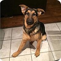 Adopt A Pet :: Serenity (Ren) - Hamilton, ON