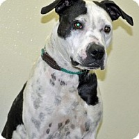 Adopt A Pet :: Sadie - Port Washington, NY
