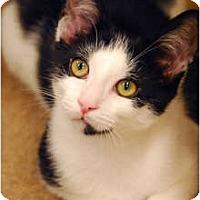 Adopt A Pet :: Mario - Encinitas, CA