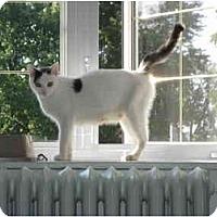 Adopt A Pet :: Alexandra - Montreal, QC