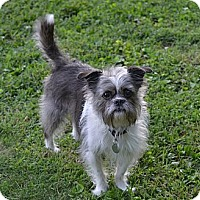Adopt A Pet :: Murray ~ Adopted - Troy, OH