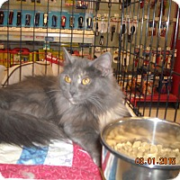 Adopt A Pet :: Twitch - Riverside, RI