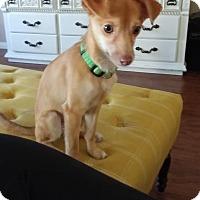 Adopt A Pet :: Bartholomew bonded pair - Las Vegas, NV