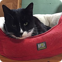 Adopt A Pet :: Tommy - Manchester, CT