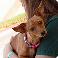 Adopt A Pet :: Cujo - Palmdale, CA