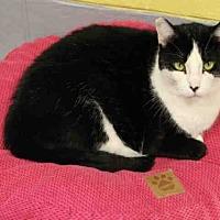 Adopt A Pet :: ELOISE - Hampton Bays, NY