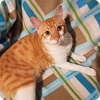 Adopt A Pet :: Dudley - Edmond, OK
