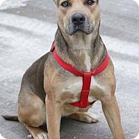 Adopt A Pet :: JuneBug - Blue Bell, PA