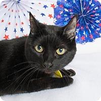 Adopt A Pet :: Priscilla - Chico, CA