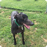 Adopt A Pet :: Sizzle  RPG Prattle - Canadensis, PA