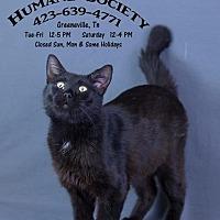 Adopt A Pet :: Onyx - Greeneville, TN