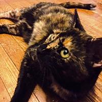 Adopt A Pet :: Golden Girl (01/13/2017-123 Willow Grove Fosters) - Greenville, DE