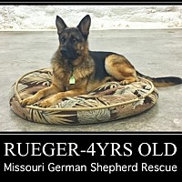 Adopt A Pet :: Rueger - Kansas City, MO