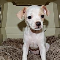 Adopt A Pet :: Dandi - Granbury, TX