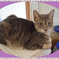 Adopt A Pet :: Brandy - Mt. Prospect, IL