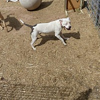 Adopt A Pet :: Trooper - Clarkdale, AZ