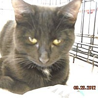 Adopt A Pet :: Michael - Riverside, RI