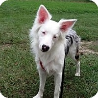 Adopt A Pet :: Pixie Sticks/Sophie - Madison, WI