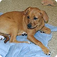 Adopt A Pet :: Payton - Minneola, FL