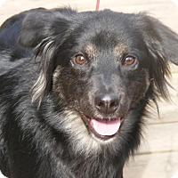 Adopt A Pet :: Jovie - Toledo, OH