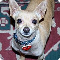Adopt A Pet :: Oren- sweet and quiet- video - Temecula, CA