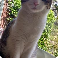 Adopt A Pet :: Magellan - Novato, CA
