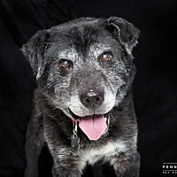 Adopt A Pet :: DEACON - Nashville, TN